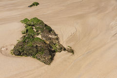 Sea sand stone algae. Stock Photography