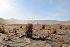 Sea of Sand, Tengger massif, East Java, Indonesia Royalty Free Stock Photo