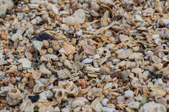 Sea sand texture made of shell and stone pieces. Stock Image