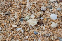 Sea sand texture made of shell and stone pieces. Royalty Free Stock Photography