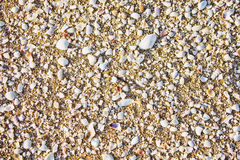 Sea sand texture with shell fragments Stock Photography