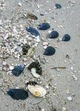 Sea sandy beach, seashells on the shore stock photography