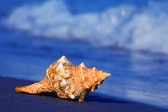 Sea and sandy beach with shell Royalty Free Stock Images