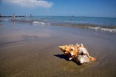 Sea and sandy beach with shell Royalty Free Stock Photos