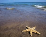 Sea and sandy beach with starfish Royalty Free Stock Image