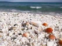 Sea of Sardinia. Pebbles as rice, orange shells Stock Image