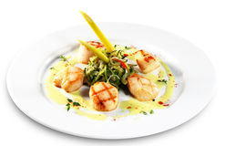 Sea Scallop Stock Images