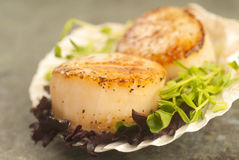 Sea Scallop with greens in a scallop shell Royalty Free Stock Images