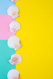 Sea scallop shells on colored backgrounds with negative space, t Stock Photos