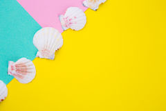 Sea scallop shells on colored backgrounds with negative space, t Royalty Free Stock Photography