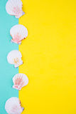 Sea scallop shells on colored backgrounds with negative space, t Royalty Free Stock Photo
