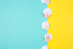 Sea scallop shells on colored backgrounds with negative space, t Stock Image