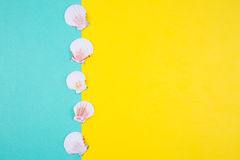 Sea scallop shells on colored backgrounds with negative space, t Stock Images