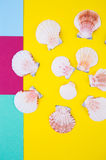 Sea scallop shells on colored backgrounds with negative space, t Royalty Free Stock Photos