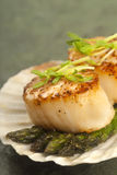 Sea Scallop With Asparagus In A Scallop Shell Royalty Free Stock Image