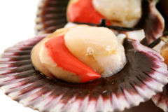Sea Scallops Stock Photos