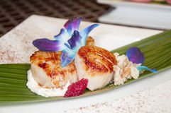 Sea scallops Royalty Free Stock Images