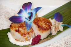 Sea scallops Stock Image
