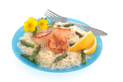 Sea Scallops and Rice Royalty Free Stock Photo
