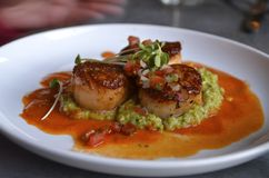 Sea scallops served on a white plate. Sea scallops served over green grits on a white plate Stock Photo