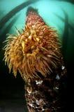 Sea Scape Stock Image
