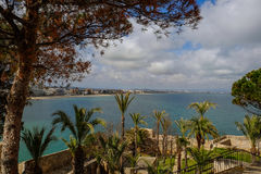 Sea scape and palms. Panoramic view of the sea and palm trees in the beautiful garden and blue sky with cloud Royalty Free Stock Image