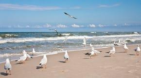 Sea scenery Stock Images