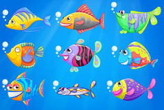 A sea with a school of colourful fishes. Illustration of a sea with a school of colourful fishes Stock Image