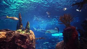 Sea and sea creatures. Fish, coral stock footage