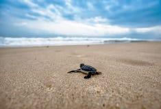 Sea, Sea Turtle, Sky, Turtle royalty free stock photo