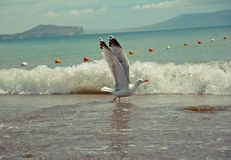 Sea and seagull royalty free stock photos