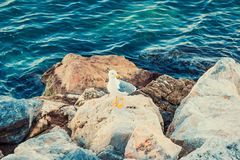 Sea seagull bird. On stone Stock Images