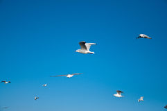 Sea & Seagulls Royalty Free Stock Images