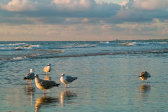 Sea and the seagulls. Dutch seaside with seagulls and waves Royalty Free Stock Images