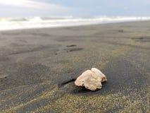 Sea, Seashell, Sand, Shore royalty free stock photos