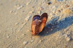 Sea Seashells im nassen Sand Stockfotos
