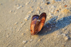 Sea. Seashells in the wet sand Stock Photos