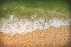 Sea and seaweed and sand Stock Image