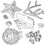 Sea set collection. Hand drawn sea set collection. Sketches of pufferfish, starfish, shells, corals. Vector illustration Royalty Free Stock Photos