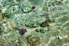 Sea shallow with corals below water surface Stock Image