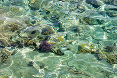 Sea shallow with corals below water surface. Stock Photo