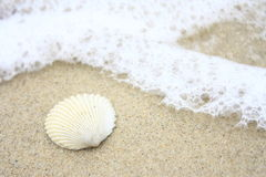 Free Sea Shell Stock Images - 10783894