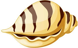 Sea shell vector illustration