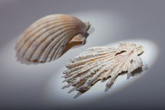 Sea shell. And fossilized Stock Photos