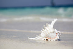 Sea shell. On a background of the Indian ocean stock image