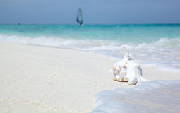 Sea shell. On a background of the Indian ocean stock photography