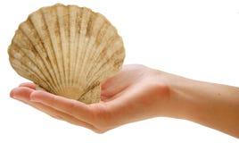 Sea shell Stock Photo
