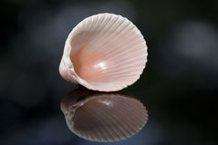 Sea Shell Stock Photo