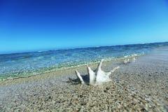 Sea shell Stock Photography