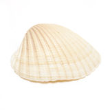 Sea Shell Royalty Free Stock Photo